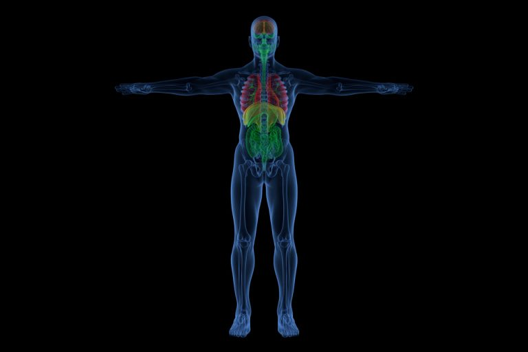 A patient's full medical imaging for surgical planning